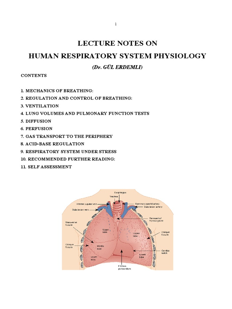 Lecture Notes on Respiratory Physiology.pdf | Lung | Respiratory Tract