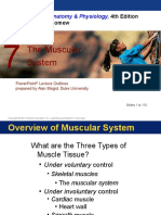 The Muscular System Ch 7