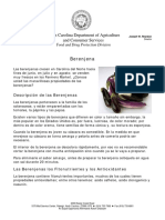 Berenje.pdf