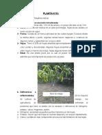 Planta-2-y-4