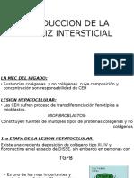 Produccion de La Matriz Intersticial