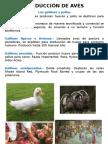 PRODUCCIÓN DE AVES.pptx