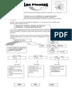 Guía de plantas 2°