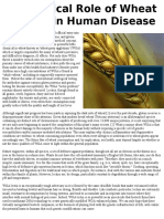 The Critical Role of Wheat in Lectin in Human Disease