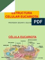 2 Organeloscelulares 110313091424 Phpapp01