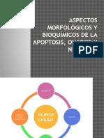 Aspectos Morfológicos y Bioquímicos de La Apoptosis