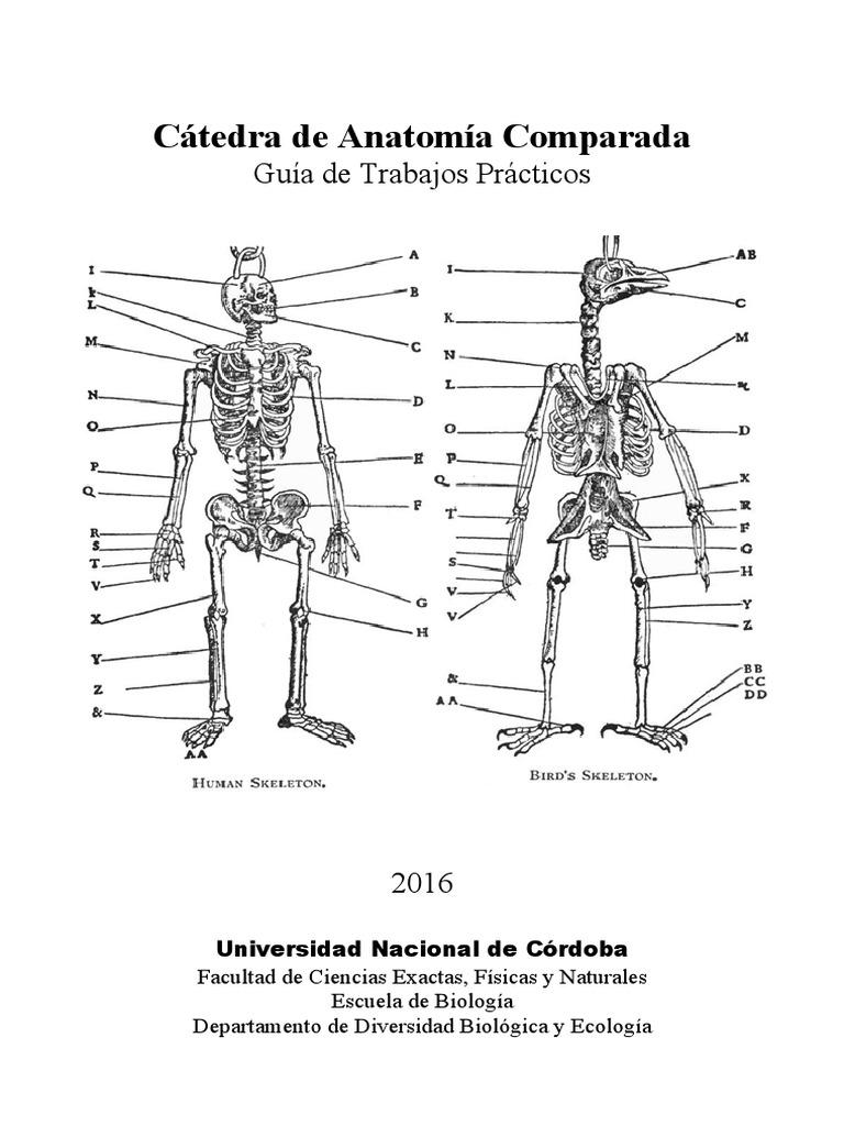 Anatomía comparada.pdf