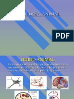 Tejidos animales Completo