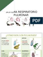 Diapositivas Del Sistema Respiratorio
