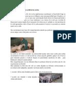 Métodos de Inseminación Artificial en Cerdos