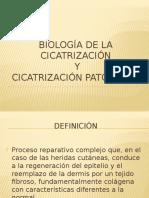 Biología de La Cicatrización