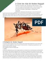 Saiba Como é o Ciclo de Vida Do Aedes Aegypti
