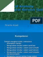 Anatomi SSTepi