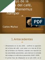 estrategiademanejodelabrocadelcaf-140212201317-phpapp01.pptx