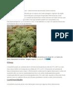 Plantar Alcachofra