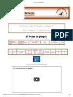 Cóndor andino-biología