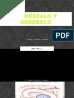 Diencefalo y Cerebelo i (1)
