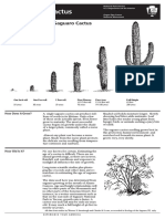 Saguaro Growth