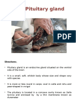3.3 Fish Pituitary Gland