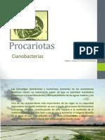 Cianofitas o Cianobacterias