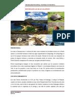 Resumen de La Historia de Galapago Incompleto