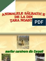 animale salbatice din romania.ppt