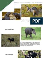 Fauna Cutervo