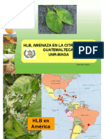 Hlb - Guatemala