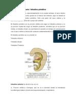 Intestino embrionario