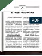 04. La Sinapsis Neuromuscular