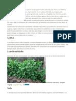 Plantar Ervilha