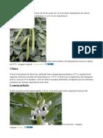 Plantar Fava