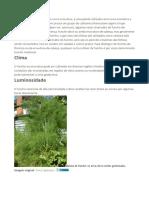 Plantar Funcho