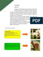 80137075 Plan de Negocio de Chompa de Alpaca II