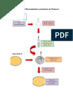Aislamiento de Microorganismos Productores de Proteasas