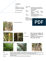 kea_bambu_ampel_bambusa_vulgaris [Morfologi & Taksonomi].pdf