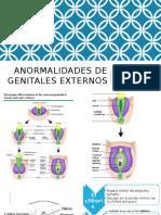 genitales externos ginecologia