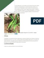 plantar gengibre.odt