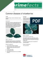 Common Diseases of Strawberries