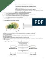Actividad de repaso de fotosíntesis