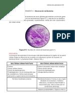 BIOLOGIA6.docx