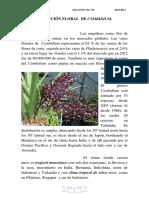 Inducción Floral Del Cymbidium