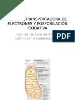 Cadena Transportadora de Electrones y Fosforilación Oxidativa (en Proceso) Ab2014