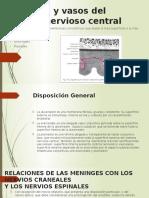 Meninges y Vasos Del Sistema Nervioso Central