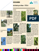 3.Proyectos y Arboles Frutales Delantera