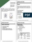 Lodos Ativados.pdf