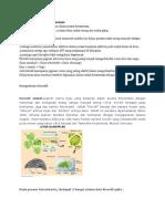 Peran Klorofil Dalam Fotosintesis