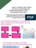 Concentración y Dilución de La Orina