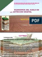 microorganismosdelsuelo-130513214147-phpapp01