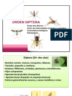 652966018.Tema 11. Orden Diptera.pdf